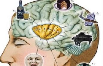 brain-360