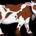 cartone cow