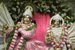 Tulasi Hara on Ekadashi